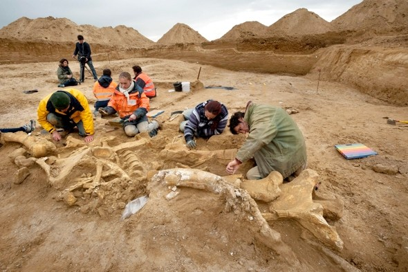 Almost-complete mammoth skeleton found near Paris