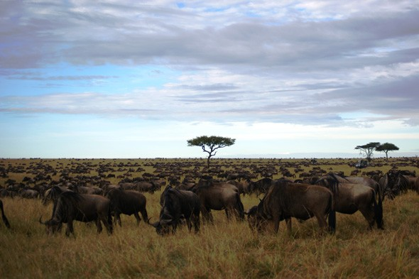 Witness the famous migration in the Masai Mara