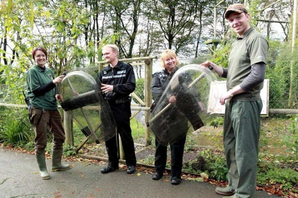 Angry Birds! Zoo staff use police riot shields to protect against aggressive cranes