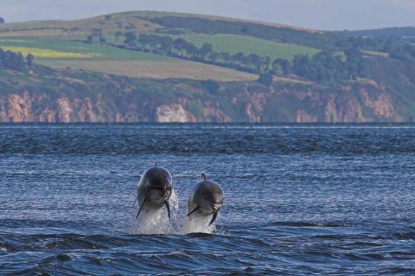 1. Northeast Scotland: Dolphins, Seals and maybe the odd Whale