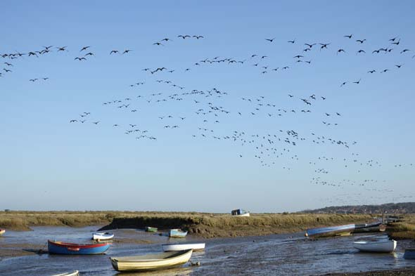 7. North Norfolk: Fields of honking Geese