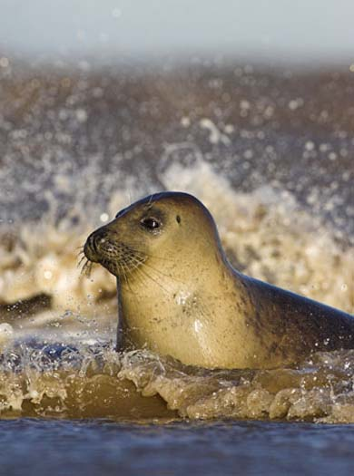 8. East Yorkshire: Seals and migrating birds