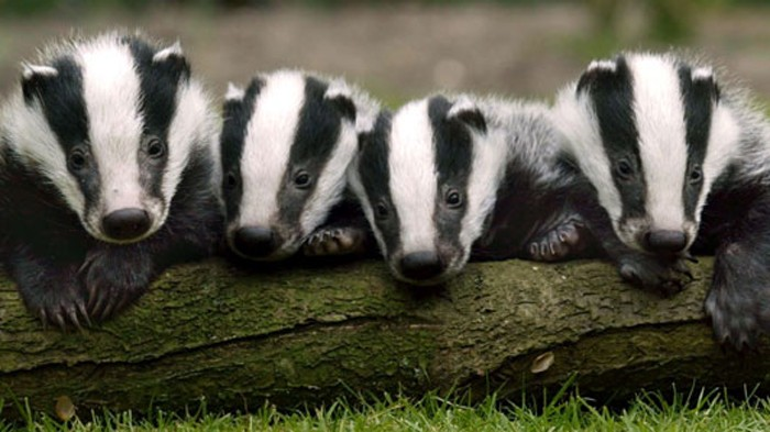 Stay in a badger hide in Wiltshire