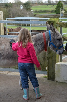Get your hands dirty at The Donkey Sanctuary