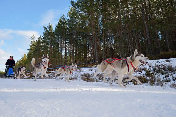 Air Baltic: Dog sled ride in Latvia