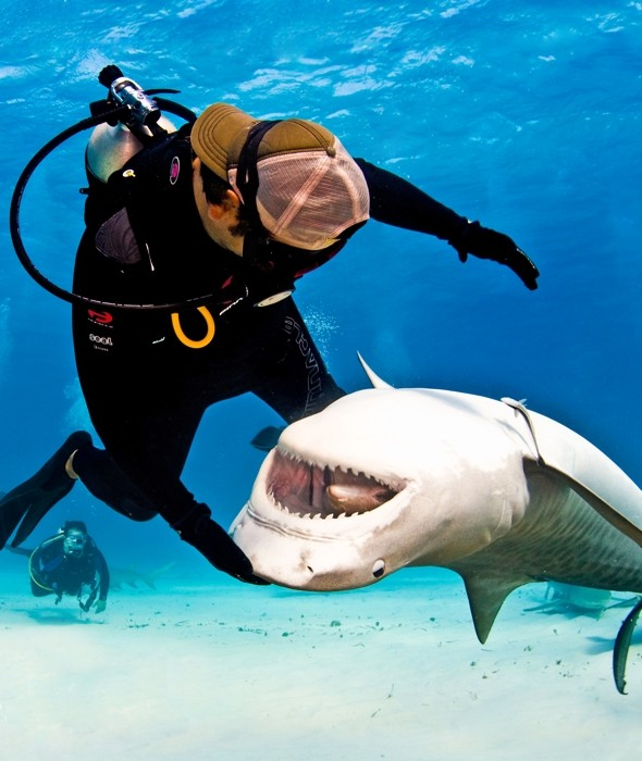 Incredible bond between diver and deadly tiger shark