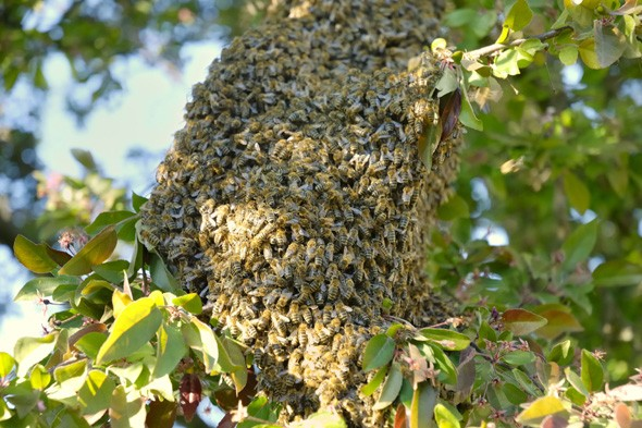 Woman crashes into beehive and dies after being stung over 500 times