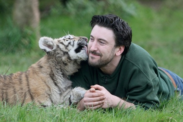 Abandoned rare tiger cubs make public debut in Kent