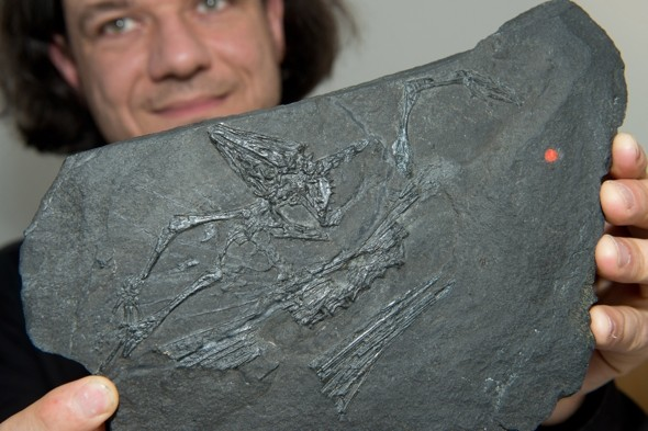 Ever seen a 250 million-year-old prehistoric 'flying dragon'?