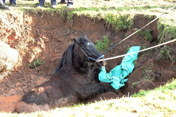 Firefighters rescue horse dangerously stuck in Somerset sink hole