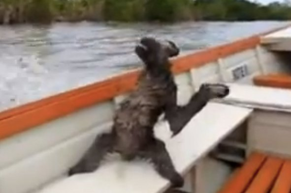 Sloth enjoys a ride on a speedboat