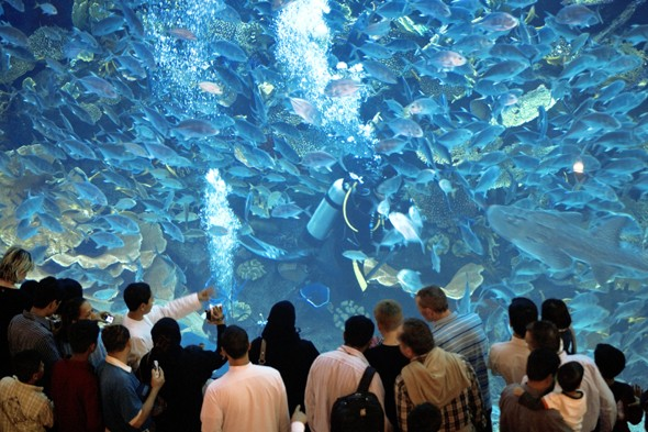 dubai mall aquarium rex - pic Of 15th May 2013