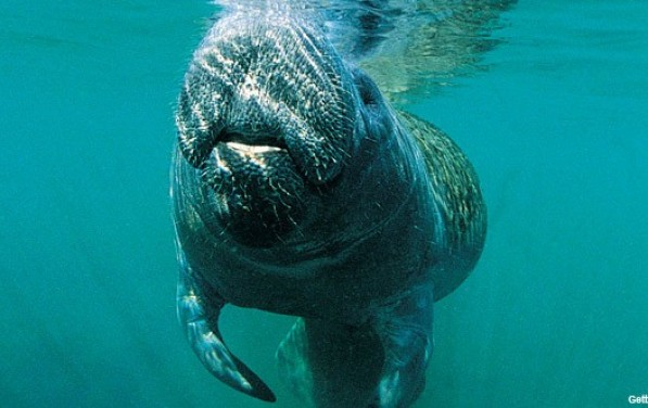 8 Awesome Animals You Can Find at State Parks