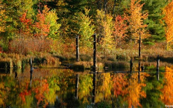 10 Great Places to See Fall Foliage