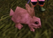 A rabbit via wowhead
