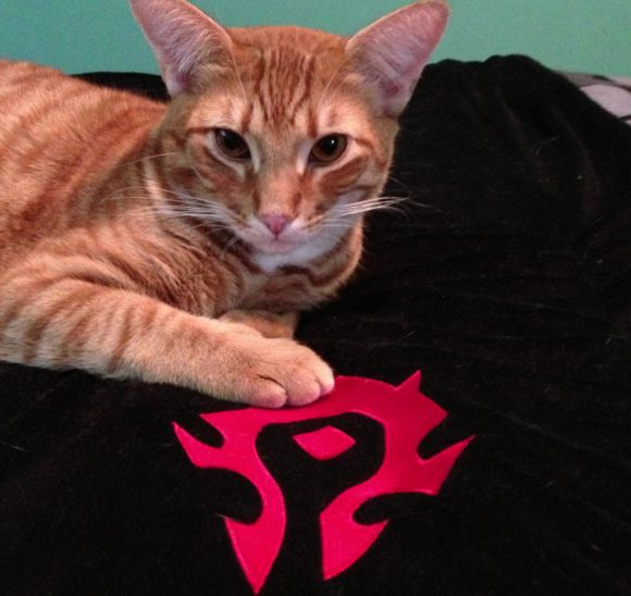 Around Azeroth A feline of the Horde SUNDAY
