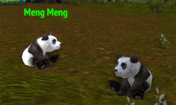 Shapeshift into a baby panda