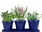 A gift that keeps on giving: Herb garden