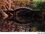 Most romantic places on earth:  The Crim Dell bridge at William & Mary