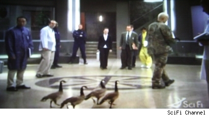 Taggart leads his collection of robo-ducks around GD