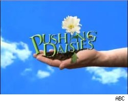 Pushing Daisies -- one of the new shows on the 2007-08 fall schedule