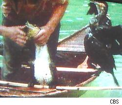 Fishing birds on Survivor China