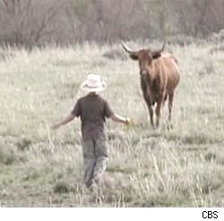 Kid Nation's Colton confronts a bull