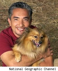 Dog Whisperer celebrates 100th episode