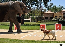 Star faces an elephant on The Greatest American Dog