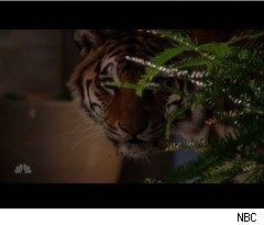 Morgan and a Tiger on 'Chuck'