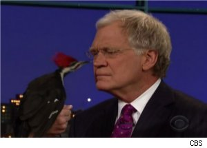 David Letterman Versus Woodpecker