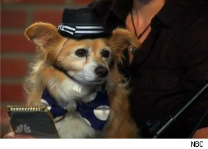 A Talking Dog on 'Last Comic Standing'