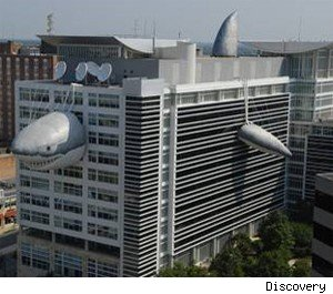 Discovery Channel building with shark