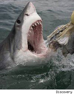 Shark Week 2010: Dun Dun ... Dun Dun ... It's Baaack!
