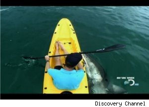 Close Encounters with Sharks on 'Ultimate Air Jaws'