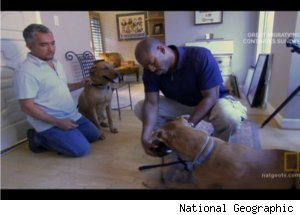Cesar Millan Assists Astronaut on 'Dog Whisperer'