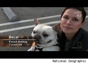 Rhona Mitra's Bulldog Has a 'Napoelon Complex' on 'Dog Whisperer'