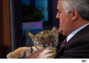 Jay Leno Gets Bitten by a Baby Jaguar