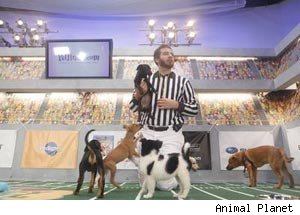 Puppy Bowl VII