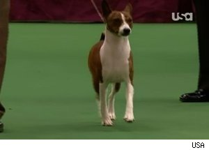 Westminster Dog Show  Airing In Canada