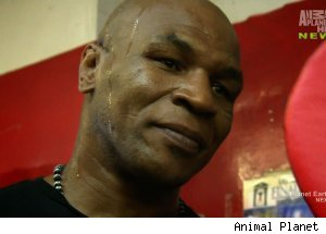 Mike Tyson, 'Taking on Tyson'