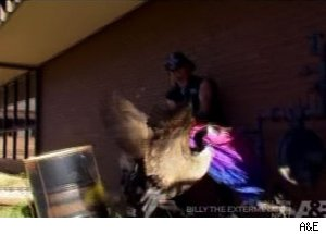 'Billy the Exterminator'