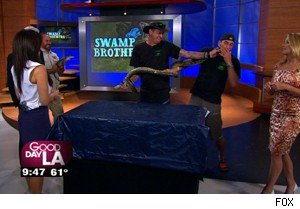 A little anaconda musk with the 'Swamp Brothers' on 'Good Day LA'