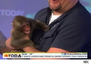Japanese macaques gone wild on 'Today'