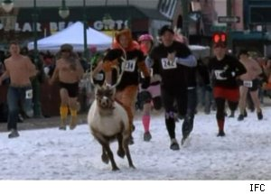 Running with Reindeer, 'Whisker Wars'
