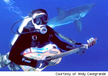 andy casagranda serenading sharks