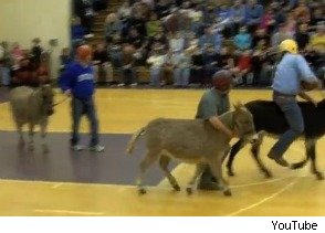 Donkey basketball -- riotous good time or hate sport?