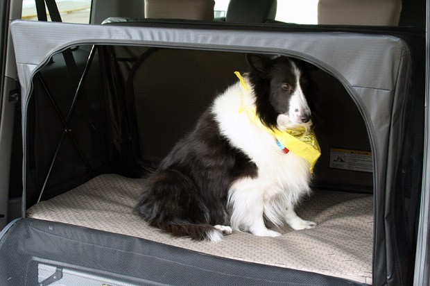 Review: 2010 Honda Element with Dog Friendly package leaves tails ...