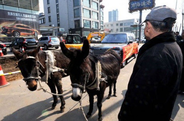Range Rover towed by Donkeys