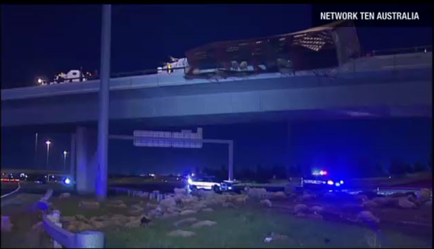 Overturned tractor trailer in Melbourne with sheep